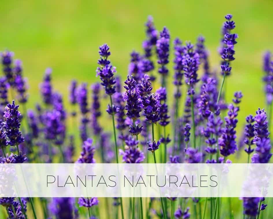 Plantas Naturales Vedayur